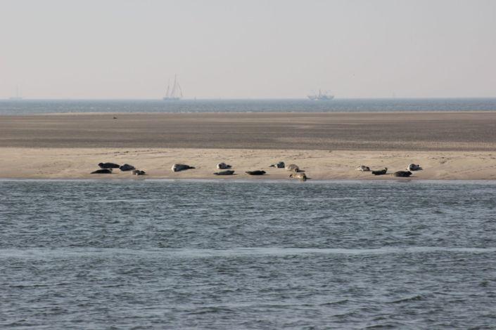 meerdagse tochten zeilen Waddenzee IJsselmeer